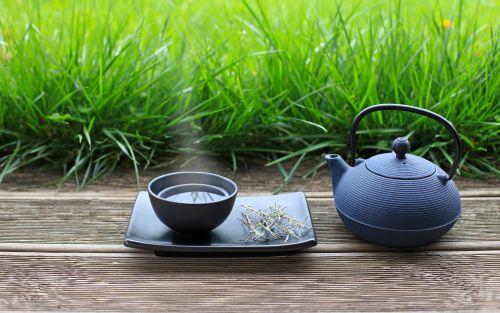 Disfruta del aroma y generosidad medicinal de la Hierba Santa