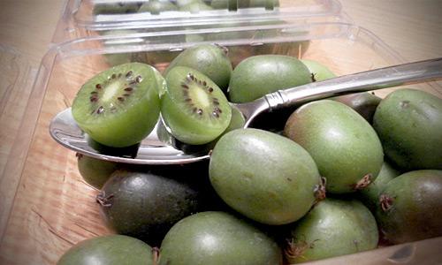 Consume Vitamina C de un maestro: El Kiwi