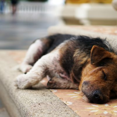 Cómo acabar con el cansancio definitivamente