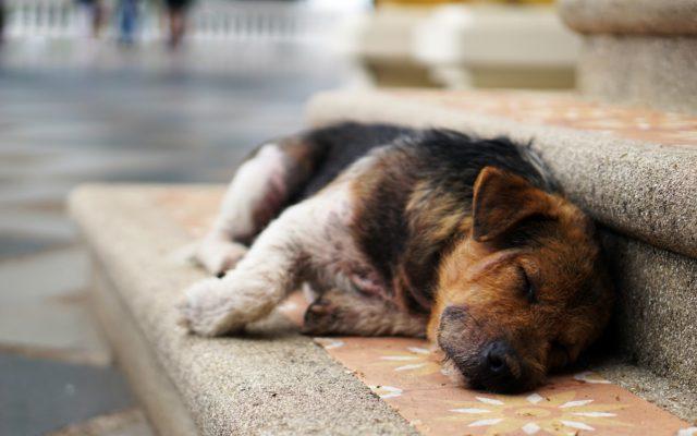 Cómo eliminar el cansancio definitivamente