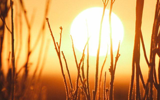 Todo sobre el cuidado de la piel y el sol